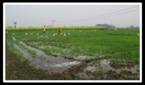 Irrigation inondation