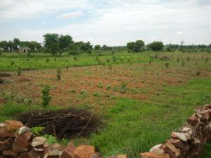 Plantation d'arbre au milieu d'un champs