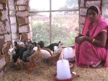 femme indienne dans son poulailler