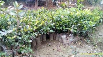 semi de plantation d'arbres créé par la pépinière que Rain Drop a créé en Inde