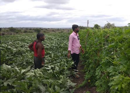 deux indiens dans un champ participent à la transition agricole