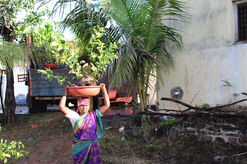 Femme indienne portant une plante