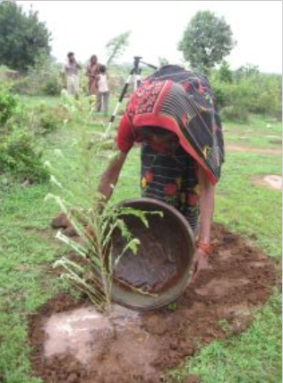Indian woman waters her newly planted tree