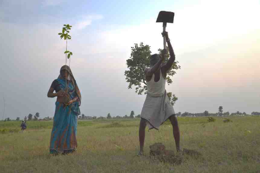 couple of indian villagers indiens plant a tree